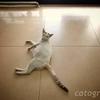 バンコクのセブンイレブンにいたドヤ顔の猫