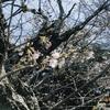 桜前線が近づき、NHKの連ドラで盛り上がる時期です