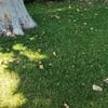芝生を上手に育てる方法