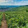 シャンパーニュの旅~ランスとシャンパン銘醸地を訪ねて