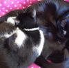 今日の黒猫モモ&白黒猫ナナの動画ー962