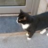 フランスで出会った猫