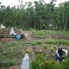 農作業31日目