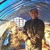 無農薬無肥料 お正月用のもち米を買いに大西さんの農園へ