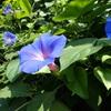 鮮やかに咲く夏の草花。