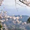 【52の宿題】week1:花を使って、季節を感じる撮ってみよう(2回目)