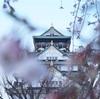 【2019随時更新】大阪城公園の桜の開花状況と撮影スポットまとめ
