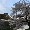 岸和田城 夜桜もステキです!ほか。