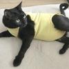 【猫の舐めすぎハゲ対策その3】エリザベスウエアの感想、良かったこと気になったこと