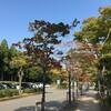 圓通寺の借景庭園