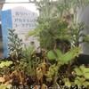 庭の野草薬草・野菜。メモにて意識して、食そう