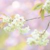 """春にぴったりなLightroomプリセット """"春プリ"""""""