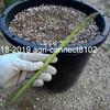 アスパラガスの収穫が始まりました