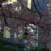 上野公園は着々と花見準備中