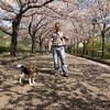 SSK (SunnySide of Kyoto)(+736/1101)