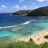 【ハワイのおすすめ観光スポット】とにかく海がきれいな『ハナウマ湾(ハナウマベイ)』!!マングースVS〇〇も・・・