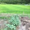 畑仕事 ☆ それは、体液の入れ替え。入れ替えの果てにダウン