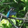 山田池公園の野鳥 ヽ(*´∀`)ノ