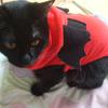 今日の黒猫モモ&黒白猫ナナの動画-655