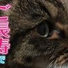 長寿猫で表彰されました! Long life cats are commended!