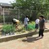 やまびこ:りりこトマトを植える