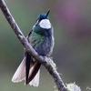 コスタリカ ホテル内で見られる野鳥