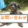【期間限定】アニマルコミュニケーション:無料モニター募集!