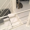 猫の好きな動画?「信州猫日和」のYoutubeウォッチャー