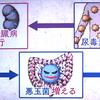 腎臓と腸内細菌