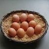 NHK ためしてガッテン…卵を食べるとコレステロール値が上がるって?…そんなもんは迷信だ!!