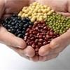 健康食品は素材、原材料が大事なのです!