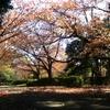 世田谷の紅葉