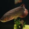【写真付き展示生物リスト】カワスイ 川崎水族館