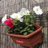 花が美しい初夏!
