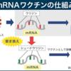 メッセンジャーRNA(mRNA) ワクチン
