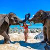 2月も象さんビーチに飛行機ビーチ&オールドタウンフォトグラファーの日々ですね