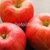 りんご写真素材
