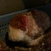 風邪をひいた鶏さん
