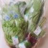 「ゆうきの実」/  札幌・有機野菜・宅配