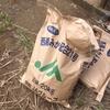 5月24日みかんの木 肥料散布