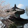 能登中島祭り会館「平成堂」と桜