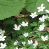 春の花を堪能~里山歩き