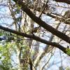 ジィちゃんと探鳥、ひので野鳥の森自然公園でのグチ…/2021-02-04
