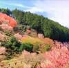 春を求めて、埼玉の桃源郷へ行ってきた