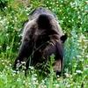 子連れでアメリカ一周旅行。野生のクマに遭遇?!