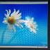 Windows 10マシンのハードウェア構成を変えたらライセンス認証が通らなくなったときの対処方法