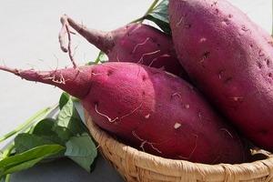 野菜って採りたてが美味しいけど、寝かせたほうが美味しくなる野菜もあるんです!