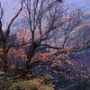 晩秋の京都北山 ― 峠道を歩く