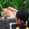 湘南です16 なーまんの世間ネコ歩き 猫サマの夢