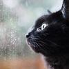 猫は梅雨が嫌い!湿気対策や元気がないときは?
